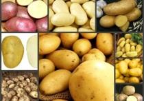 Костромским аграриям рекомендовано налечь на семенной картофель