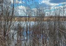 В реке Калужской области ищут тело утонувшего рыбака