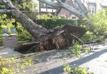 В воскресенье вечером, 11 апреля, в Барнауле рядом с домом на Павловском тракте, 136 на прохожего упало дерево.