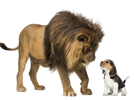 В Правительстве готовят новые правила содержания диких животных в неволе
