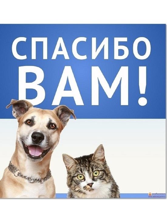 Костромской фонд «Право на жизнь» выкупил участок земли, где находится приют для животных