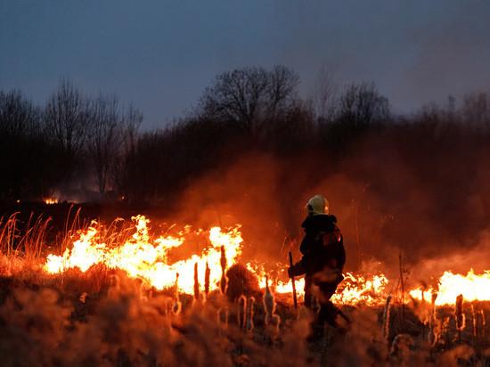 125 палов травы произошло в Псковской области с начала года