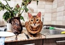 Наглые коты с