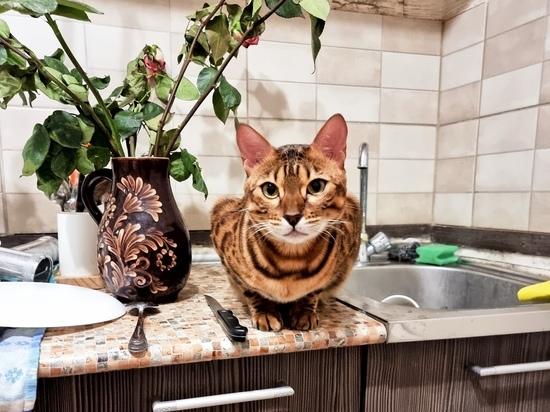 """Наглые коты с """"криволученской закалкой"""" помогают Бабе Маше спасать Тульскую область от нечисти"""