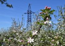 Энергетики обеспечили электроэнергией 49 объектов АПК