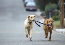 Определить места для выгула домашних животных – это обязанность органов местного самоуправления – именно так распределяет полномочия федеральный закон, принятый в 2019 году