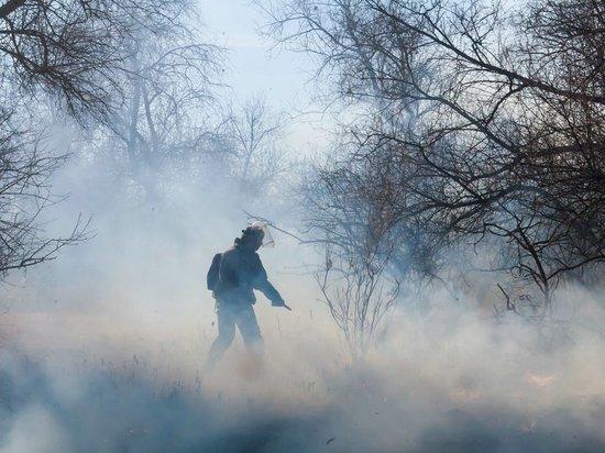 Причиной крупного пожара, случившегося в лесном массиве у Кохомского шоссе, стал пал травы