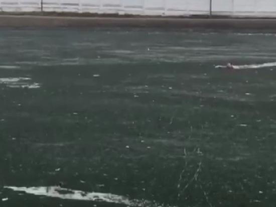 Мужчина в Москве бросился спасать собаку в озеро и утонул