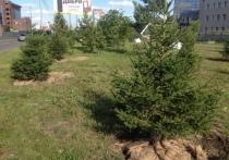 Мэрия готовится заменить 400 деревьев