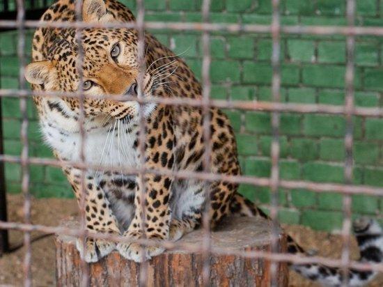 Ивановский зоопарк приглашает на работу экскурсоводов
