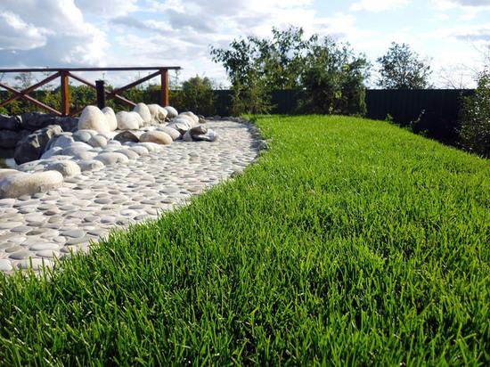 Газонная трава оптом и в розницу - «Мировой-газон»