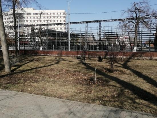 Оренбургские депутаты предложили законопроект, касающийся бездомных животных