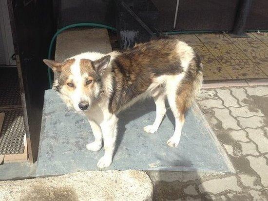Престарелых псов в Смоленске из-за болезни хозяйки мини-приюта нужно помочь перевезти по новым адресам