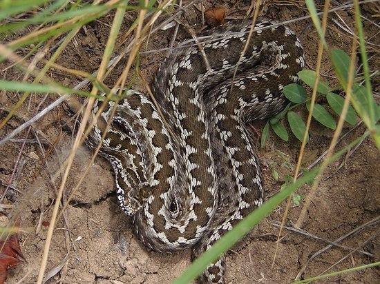Змея ужалила его в Астраханской области