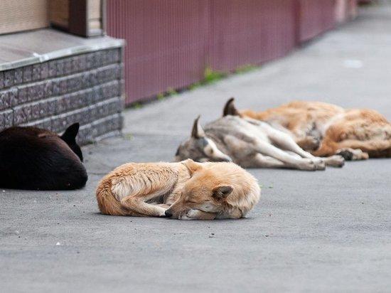 В Тамбовской области участились случаи нападения на людей бродячих собак