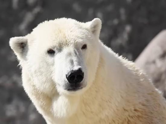 В Ленинградском зоопарке умерла одна из старейших белых медведиц мира