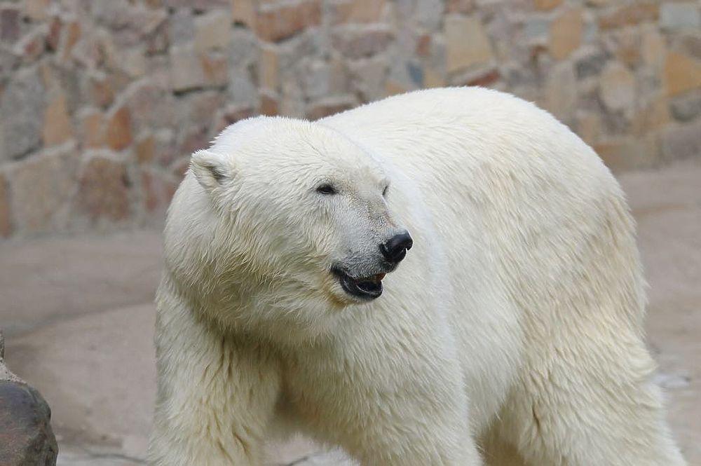 Умерла 33-летняя Услада — символ Ленинградского зоопарка