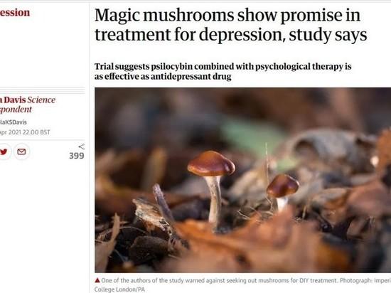 СМИ: Псилоцибиновые грибы назвали полноценной альтернативой антидепрессантов