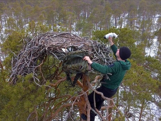 АО «Транснефть-Верхняя Волга» построило гнезда для редких птиц