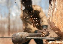 38 незаконных рубок леса выявили в Приангарье за 2 недели