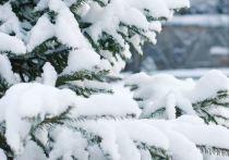 Синоптики рассказали, когда в Приамурье придет весеннее тепло