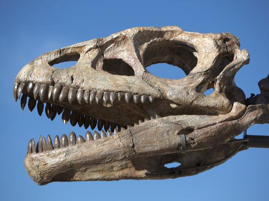 В Калифорнийском университете посчитали, сколько тираннозавров населяли Землю