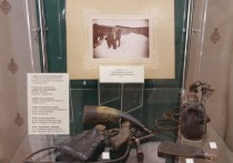 В Кирове демонстрируют шкуру волка-гиганта