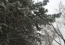 Снег с дождем ожидается в Амурской области 17 апреля
