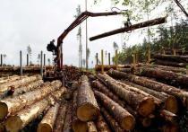 В Якутии пройдет третий Лесопромышленный форум