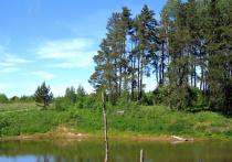 В Одинцовском городском округе введен особый противопожарный режим