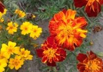 Дачный сумрак: смоленский садовод-любитель рассказал, что можно вырастить в тени