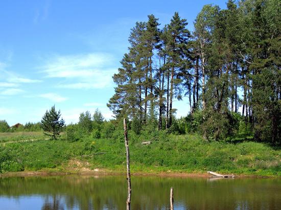 В подмосковном Одинцове запретили посещать леса