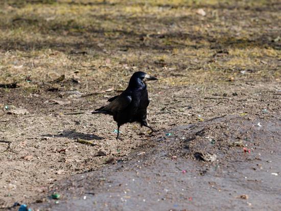 Теплую субботу обещают жителям Псковской области синоптики