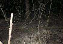 В лесу под Рязанью нашли человеческие останки