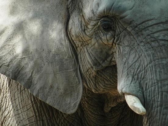 Дерущихся казанских слонов отправили на пенсию в Крым