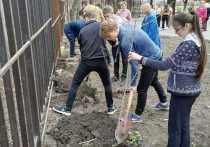 Сотни деревьев высадили на территории школ в Ставрополе