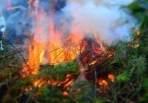 Уснувший с сигаретой пастух сжёг 24 гектара леса и травы под Еловкой
