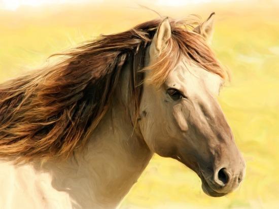 Германия: Страхуем любимую лошадь