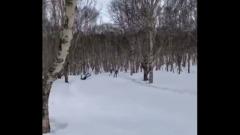 Российский лыжник погиб во время гонки, врезавшись в дерево: видео