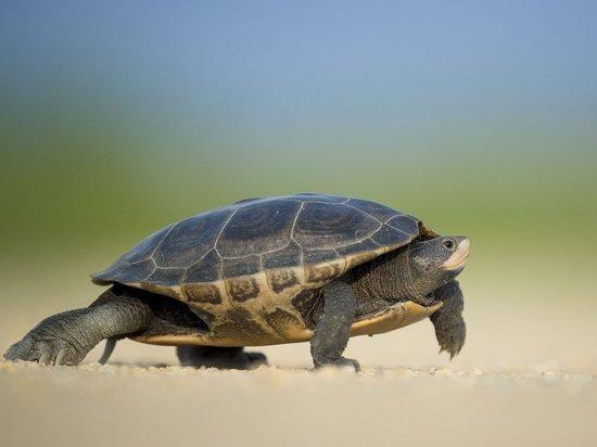 В озере российского заповедника произошла массовая гибель черепах