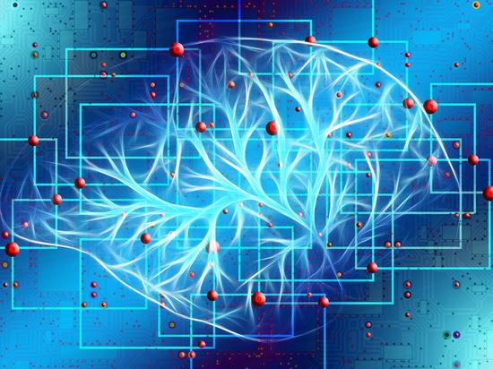 Исследователи убедились в зависимости уровня интеллекта от активности мозга