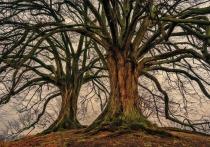 Исследовательский конкурс «Самое большое дерево» стартовал в Алтайском крае