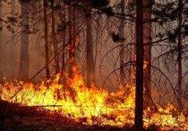 Три лесных пожара потушили в Приангарье за выходные