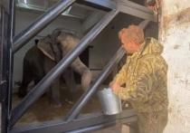Подравшиеся в цирке Казани слонихи будут жить в Крыму
