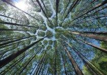Пребывание в лесах Забайкалья ограничили с 20 апреля по 10 мая