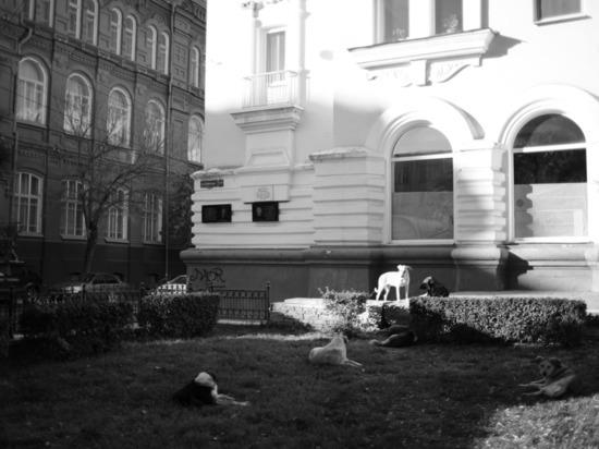 В Астрахани чиновника осудят за халатность при отлове бездомных собак