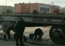 В сложную ситуацию попали жители поселка Новопетровское Истринского городского округа – из-за ремонта железнодорожных путей у них есть всего несколько часов в сутки, чтобы перебраться на другую сторону, где сосредоточена вся инфраструктура: школа, больница и детский садик