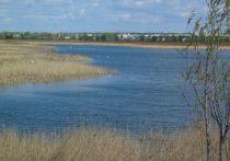 Омское Минприроды сообщило, что замора рыбы в Птичьей гавани не было