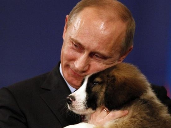 Британское СМИ рассказало, как Путин спустил на Меркель своего лабрадора