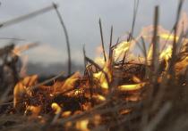 Два пожара в лесах зарегистрировано за сутки в Приангарье
